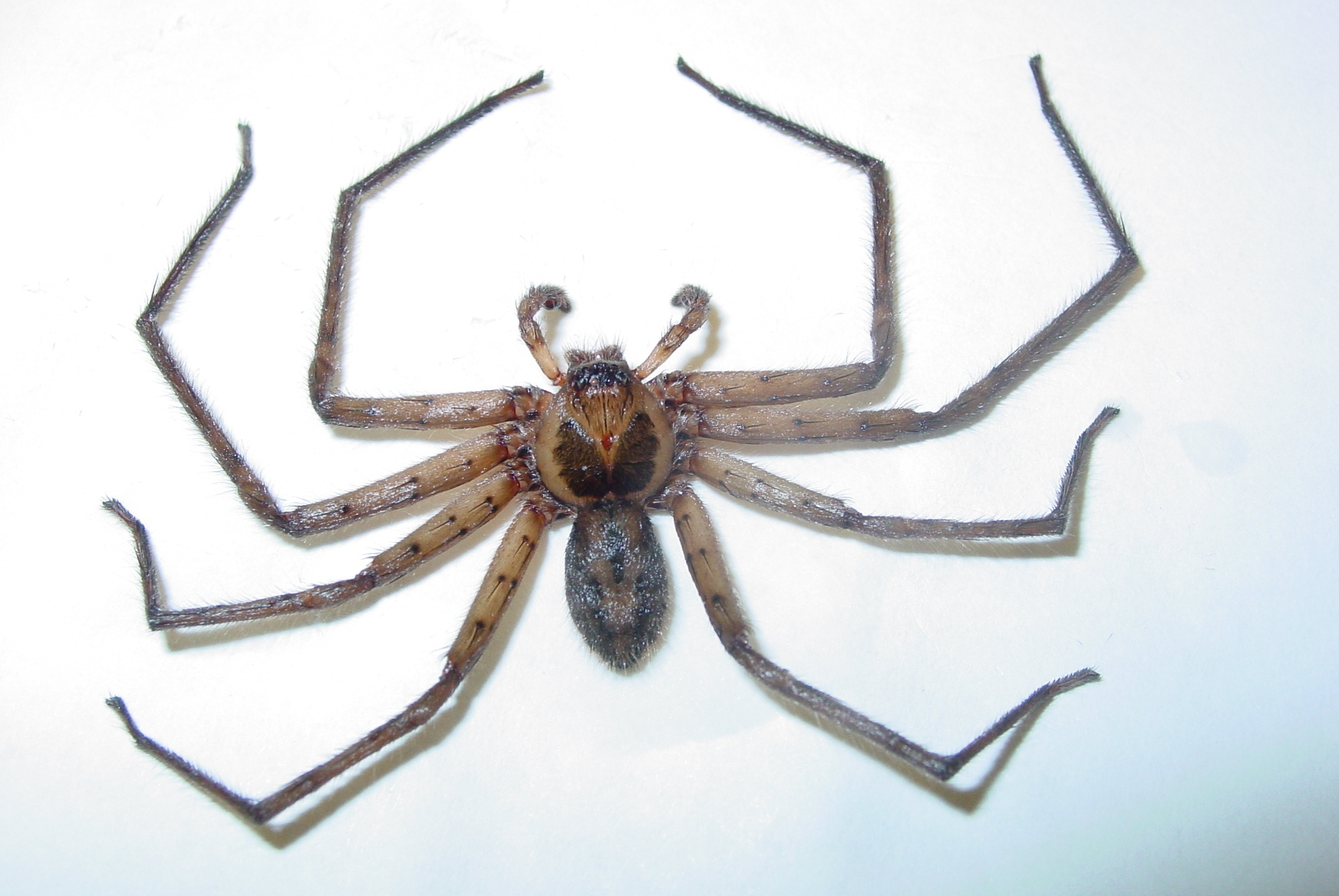 Pictures of florida house spiders
